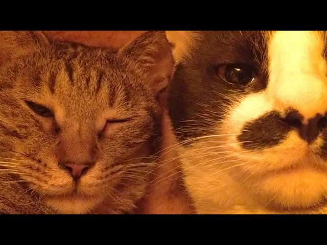 こたつの中の猫たちLIVE配信 210327