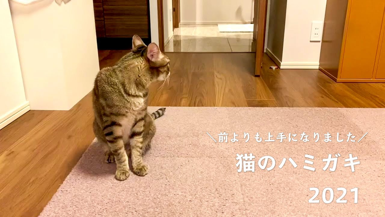 猫の歯磨き2021