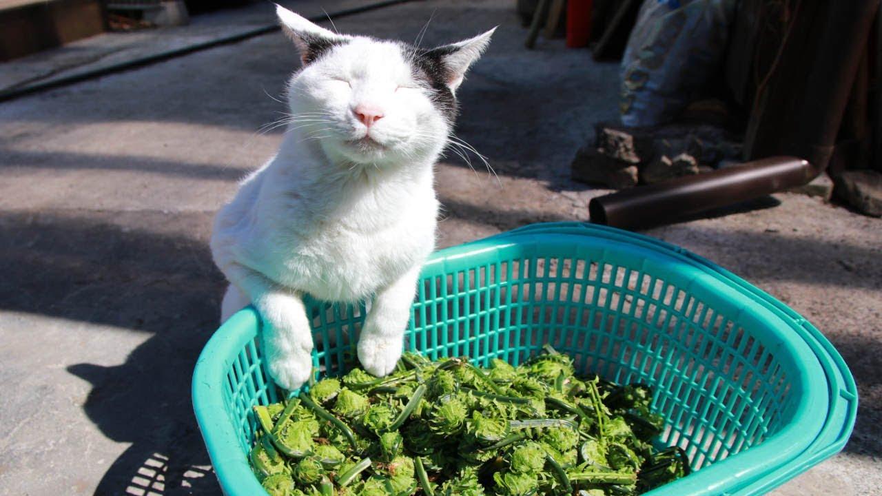 ちびと山菜こごみを収穫して産直へ 210502
