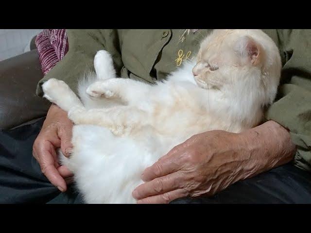 かご猫LIVE配信 朝まで? 210528