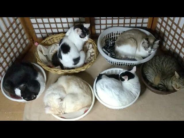 かご猫LIVE配信 朝まで? 210529