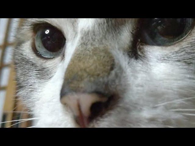 かご猫LIVE配信 210514