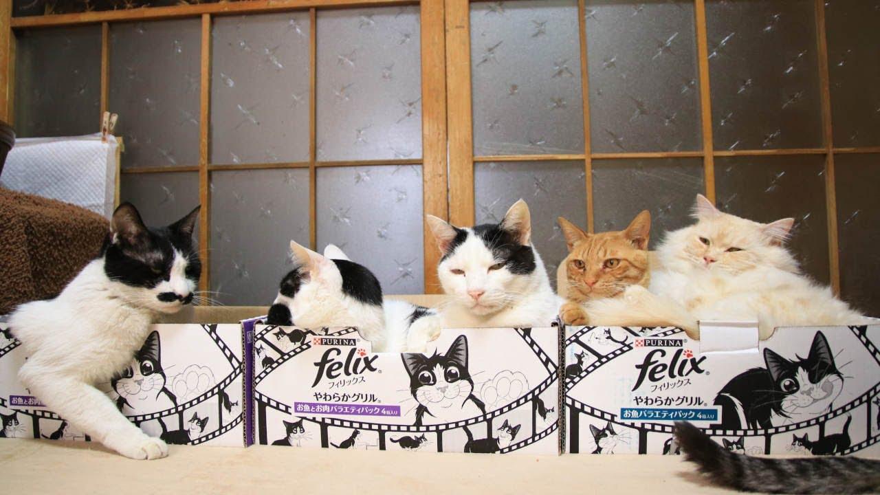 3つのFelixの箱の5匹の猫 210530
