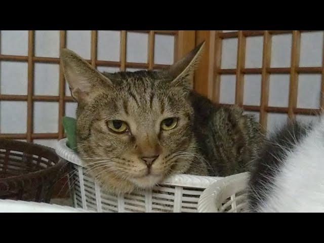 かご猫LIVE配信 210625