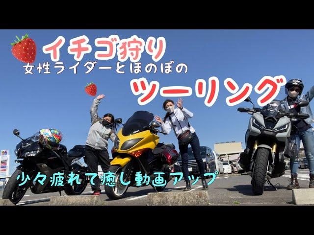 ほのぼの苺狩りツーリング【モトブログ】cbr600rr. TMAX. X-ADV
