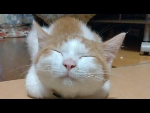 かご猫LIVE配信 210709