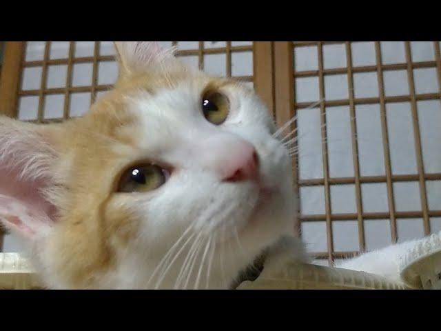 かご猫LIVE配信 5時まで 210716