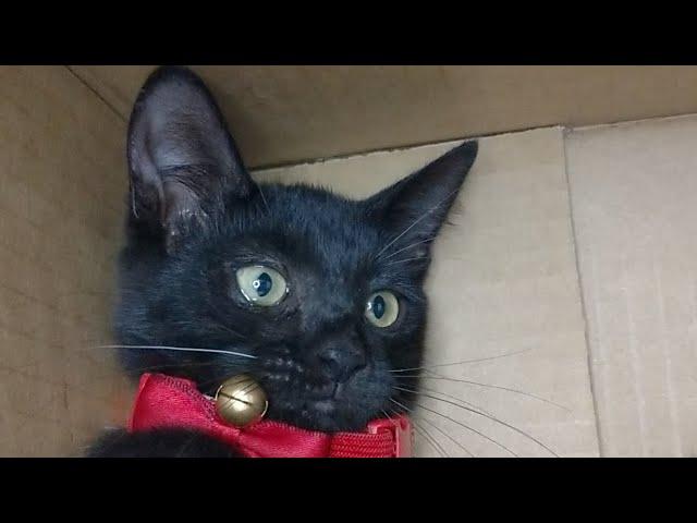 かご猫LIVE配信 210821