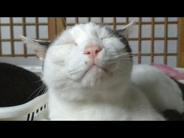 かご猫LIVE配信 210828