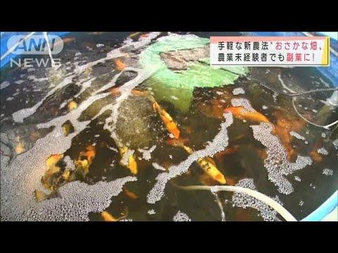 """""""次世代農業""""魚にえさ→野菜が育つ 手軽で副業に(2021年9月5日)"""