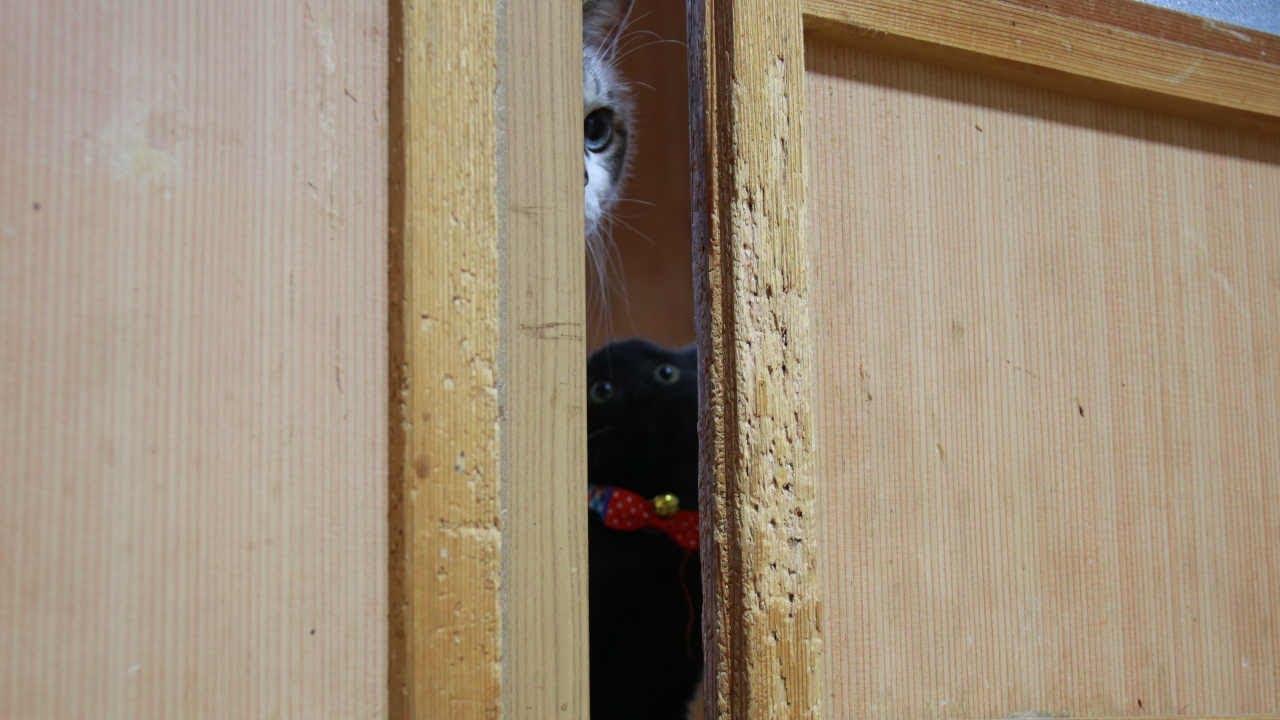 戸を開けられない子猫たち 210906