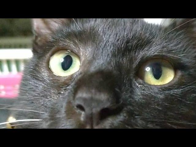 かご猫LIVE配信 210904